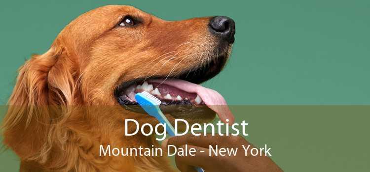 Dog Dentist Mountain Dale - New York