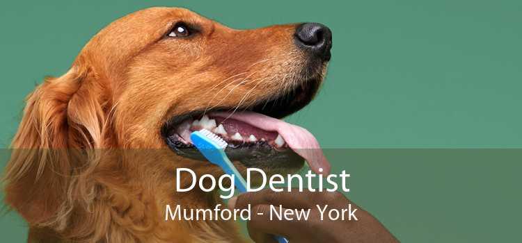Dog Dentist Mumford - New York