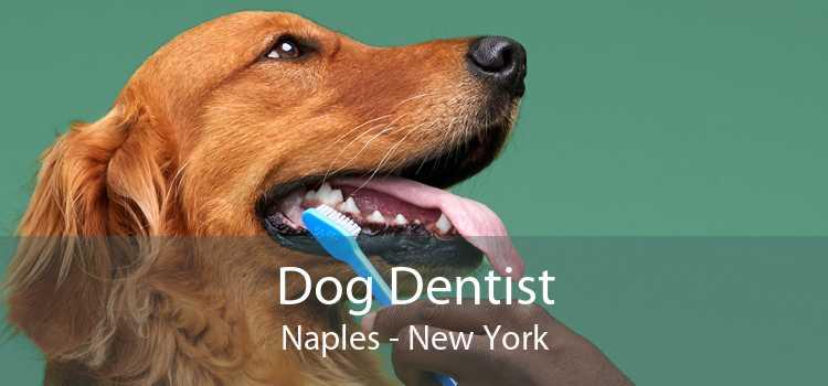 Dog Dentist Naples - New York