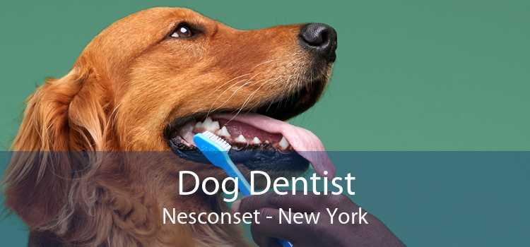 Dog Dentist Nesconset - New York