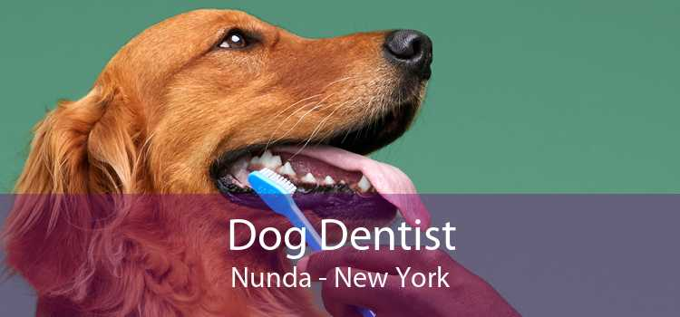 Dog Dentist Nunda - New York