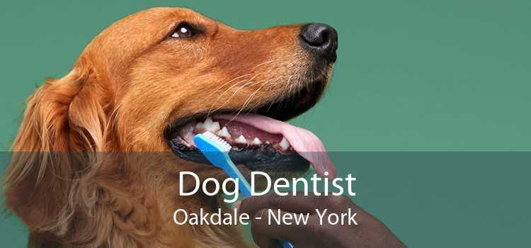 Dog Dentist Oakdale - New York