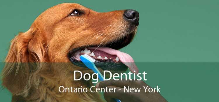 Dog Dentist Ontario Center - New York