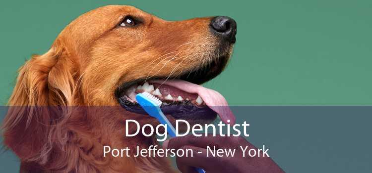 Dog Dentist Port Jefferson - New York