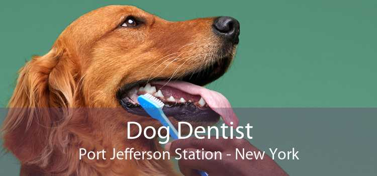 Dog Dentist Port Jefferson Station - New York
