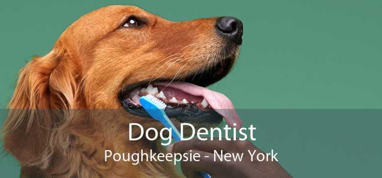 Dog Dentist Poughkeepsie - New York