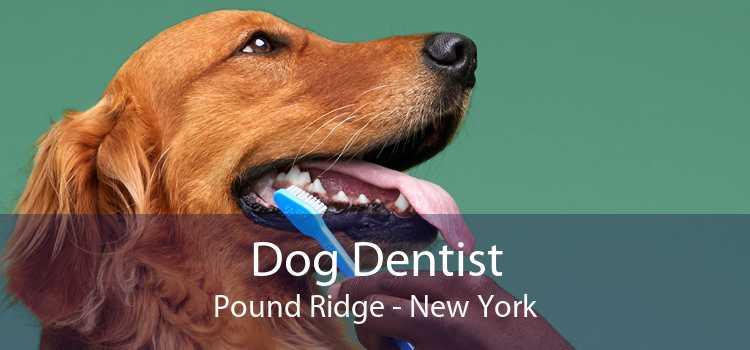 Dog Dentist Pound Ridge - New York