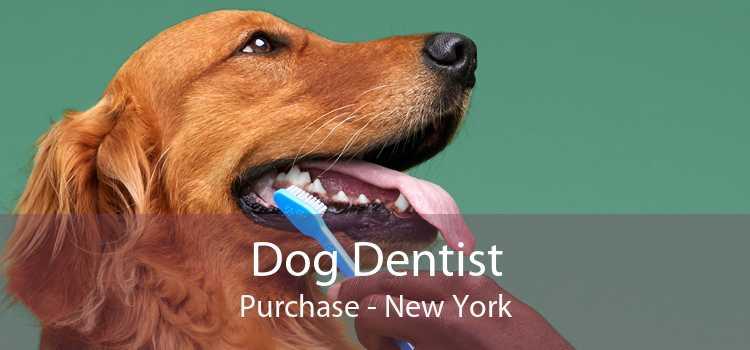Dog Dentist Purchase - New York