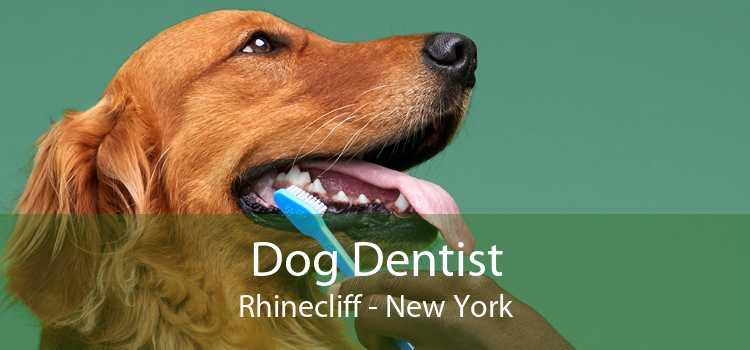 Dog Dentist Rhinecliff - New York