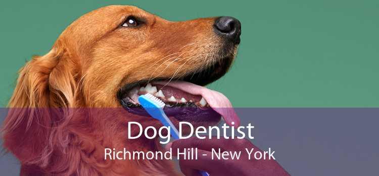 Dog Dentist Richmond Hill - New York