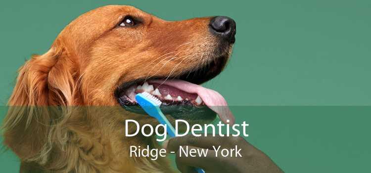 Dog Dentist Ridge - New York