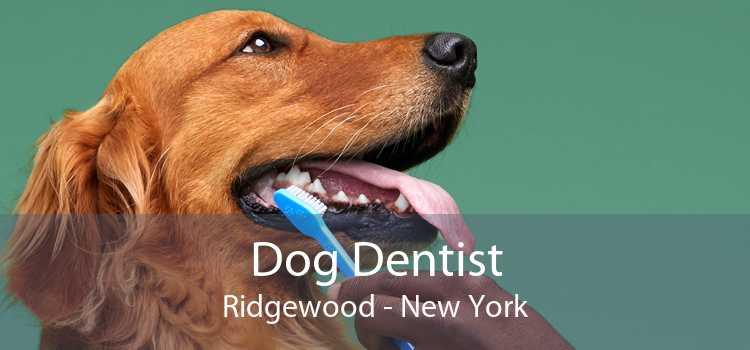 Dog Dentist Ridgewood - New York