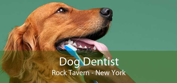 Dog Dentist Rock Tavern - New York