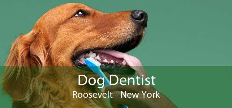 Dog Dentist Roosevelt - New York