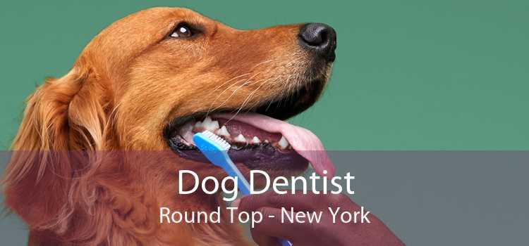 Dog Dentist Round Top - New York