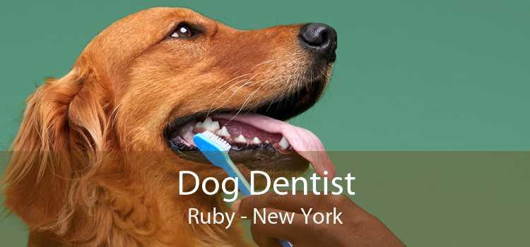Dog Dentist Ruby - New York