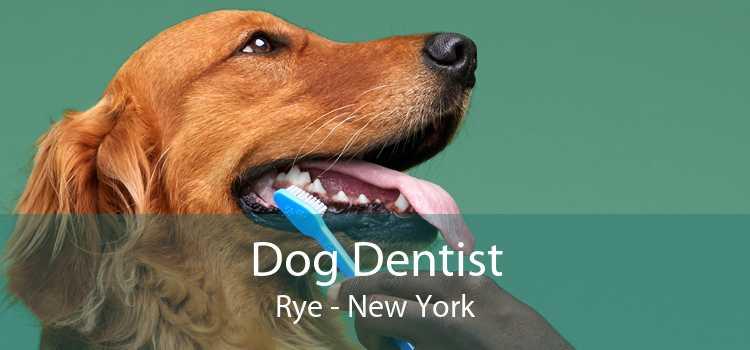 Dog Dentist Rye - New York