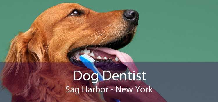 Dog Dentist Sag Harbor - New York