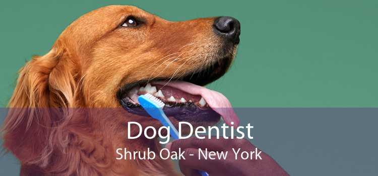 Dog Dentist Shrub Oak - New York