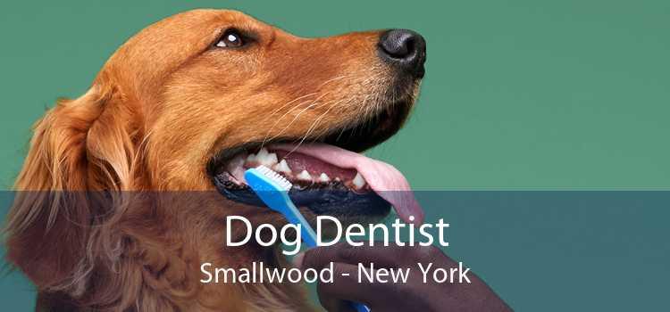 Dog Dentist Smallwood - New York