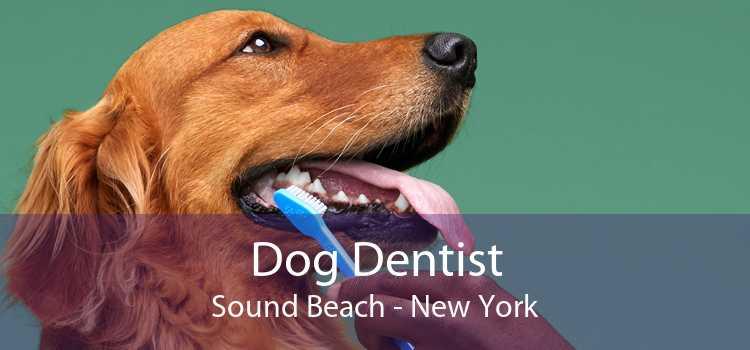 Dog Dentist Sound Beach - New York