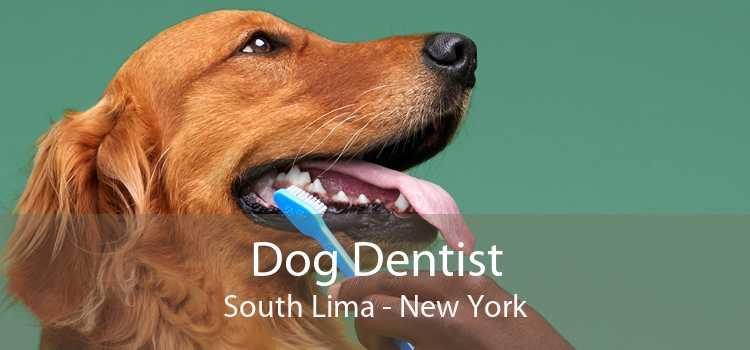 Dog Dentist South Lima - New York