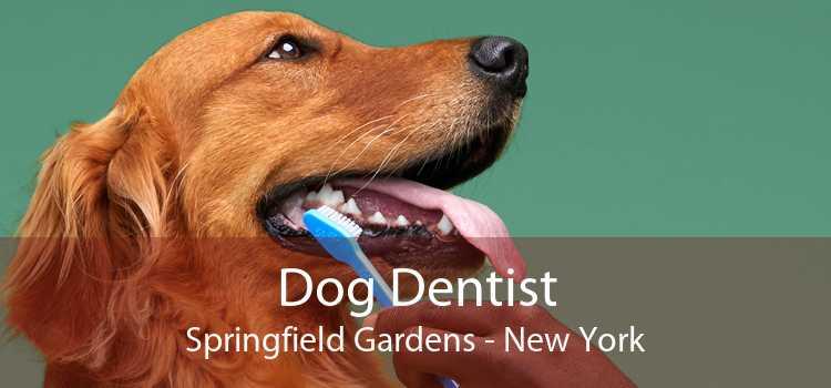 Dog Dentist Springfield Gardens - New York