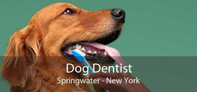 Dog Dentist Springwater - New York