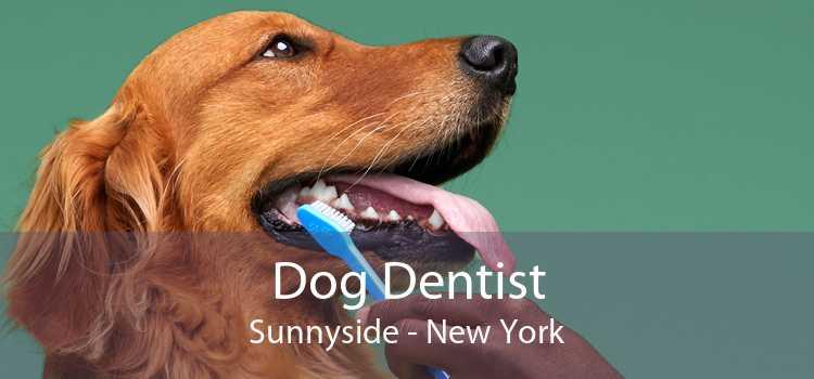 Dog Dentist Sunnyside - New York