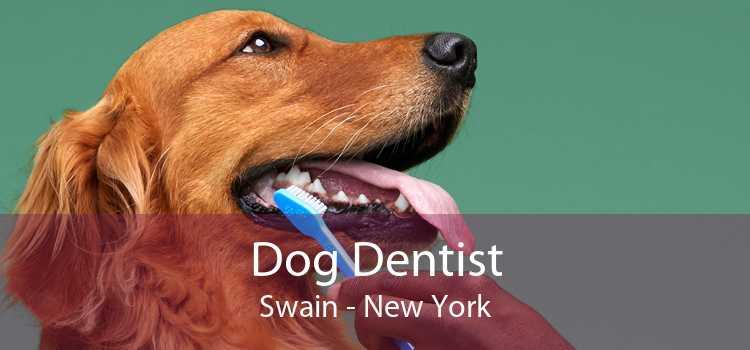 Dog Dentist Swain - New York