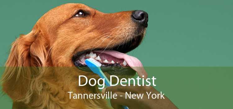 Dog Dentist Tannersville - New York