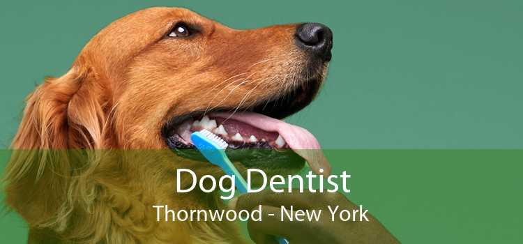 Dog Dentist Thornwood - New York
