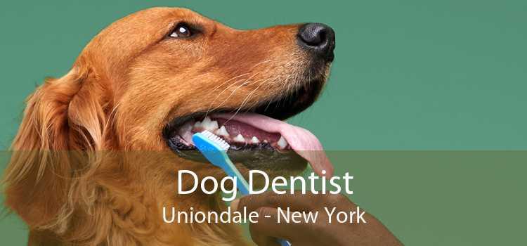 Dog Dentist Uniondale - New York