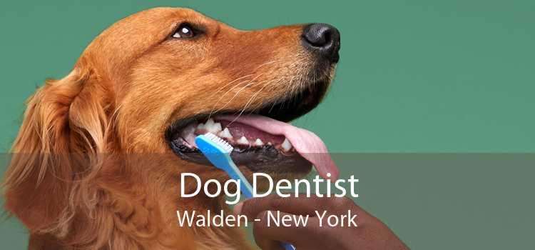 Dog Dentist Walden - New York