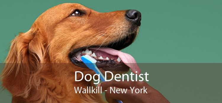 Dog Dentist Wallkill - New York