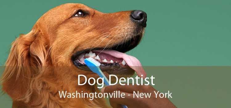 Dog Dentist Washingtonville - New York