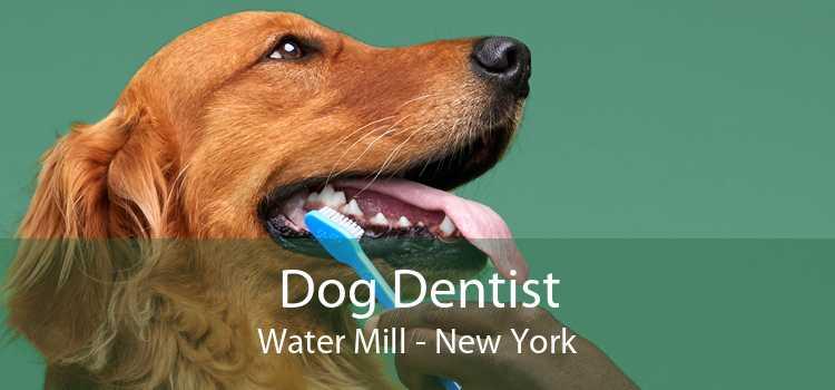 Dog Dentist Water Mill - New York