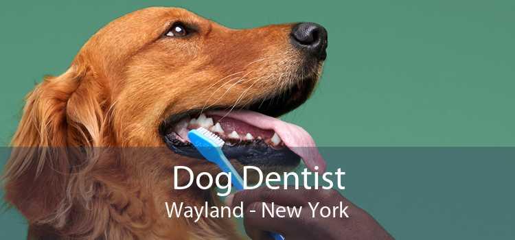 Dog Dentist Wayland - New York