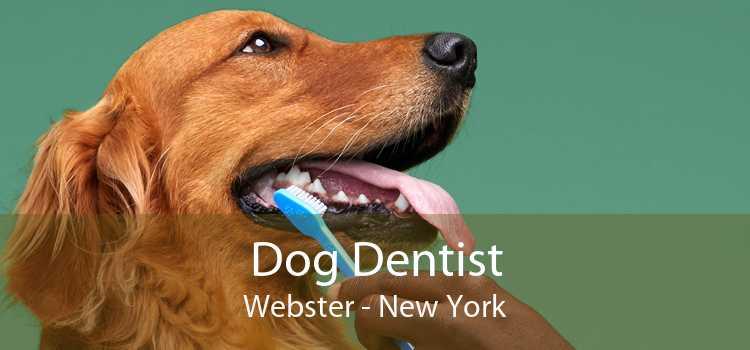 Dog Dentist Webster - New York