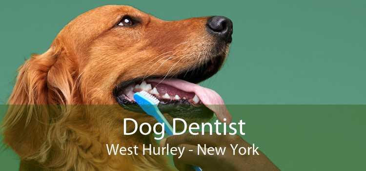 Dog Dentist West Hurley - New York