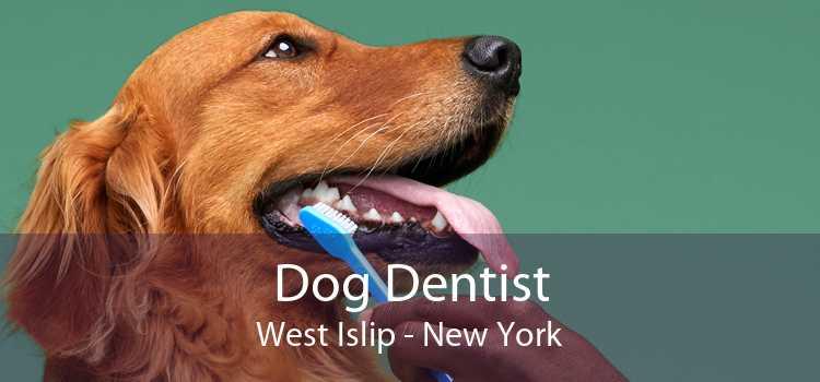 Dog Dentist West Islip - New York