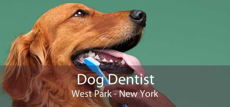 Dog Dentist West Park - New York