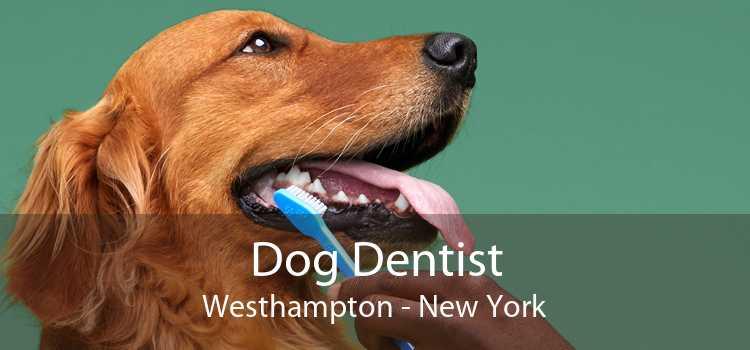 Dog Dentist Westhampton - New York