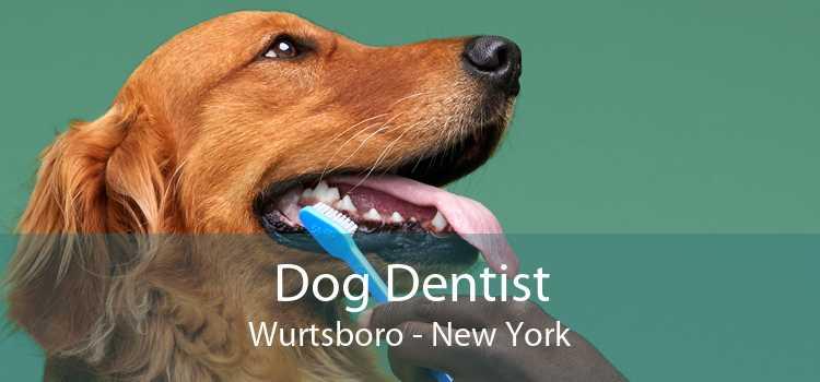 Dog Dentist Wurtsboro - New York
