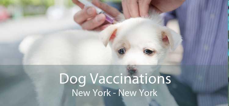 Dog Vaccinations New York - New York