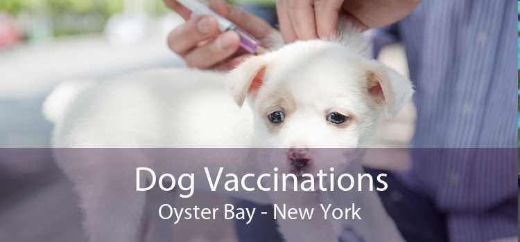 Dog Vaccinations Oyster Bay - New York