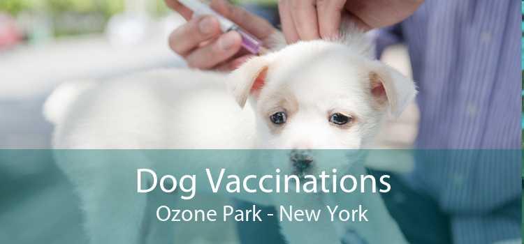 Dog Vaccinations Ozone Park - New York
