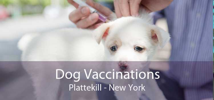 Dog Vaccinations Plattekill - New York