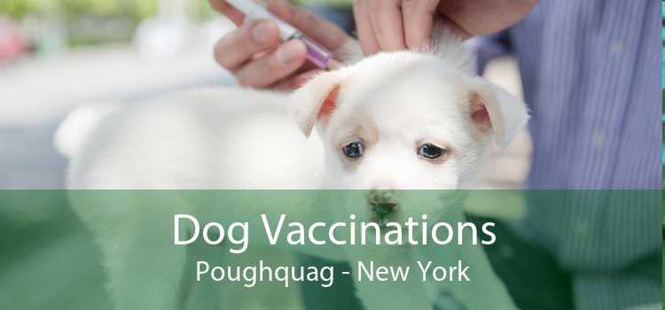 Dog Vaccinations Poughquag - New York