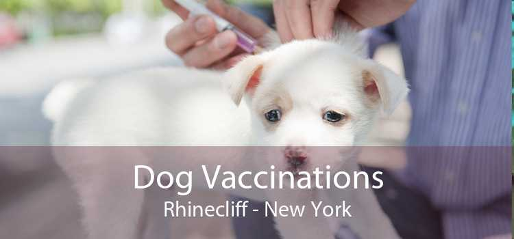 Dog Vaccinations Rhinecliff - New York